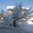 消雪池の樹氷